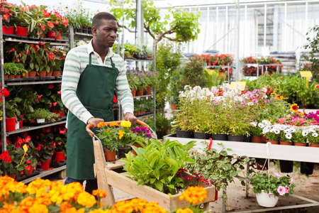 Photo for Flower seller carrying trolley with plants - Royalty Free Image