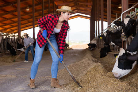 Photo pour Portrait of a young concentrated girl working in a cowshed - image libre de droit