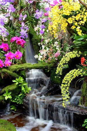 Water fall and flower in Thailand