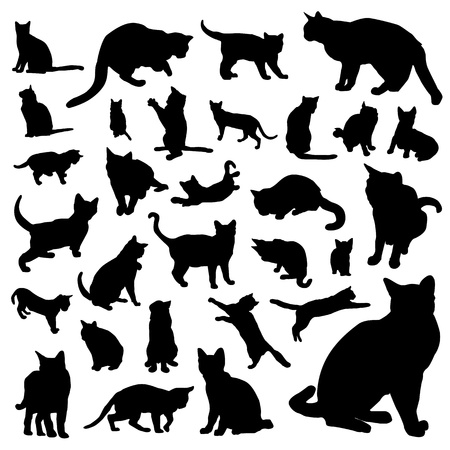collection of cat vector