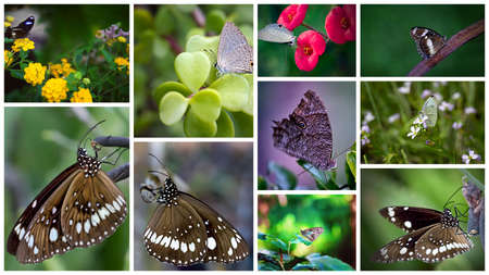 Photo pour Collage of ten images in close up of a butterfly on a flower - image libre de droit