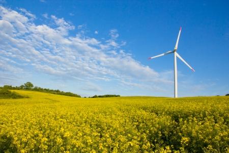 Photo pour Windmill in rape field - image libre de droit