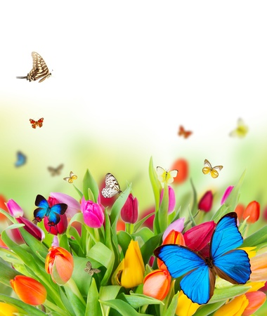 Photo for Beautiful spring flowers with butterflies  - Royalty Free Image