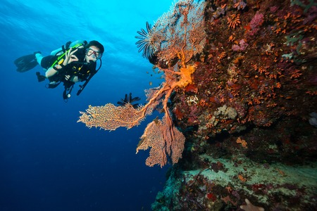 Female scuba diver showing ok sign, explore beautiful coral reef. Underwater photography in Indian ocean, Maldives