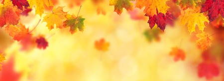 Autumn abstract background with falling maple leaves and copyspace for text