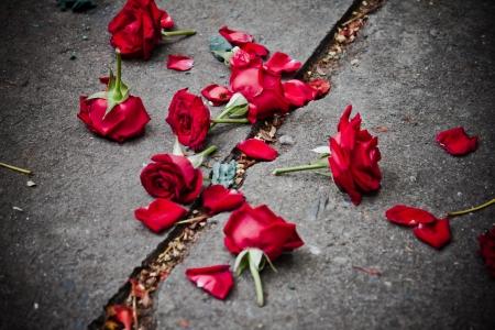 broken rose petals on dirt