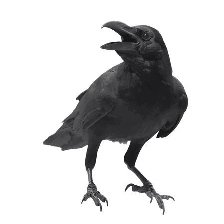 Foto de Raven bird high quality vector - Imagen libre de derechos