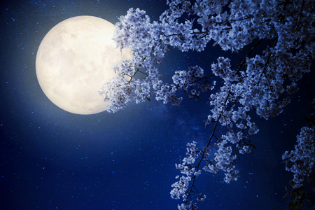 Foto de Beautiful cherry blossom (sakura flowers) with Milky Way star in night skies, full moon - Retro style artwork with vintage color tone(Elements of this moon image furnished by NASA) - Imagen libre de derechos
