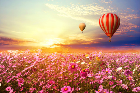 Foto de Landscape of beautiful cosmos flower field and hot air balloon on sky sunset, vintage and retro filter effect style - Imagen libre de derechos