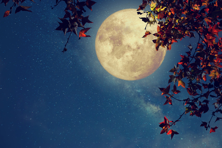 Foto per Beautiful autumn fantasy - maple tree in fall season and full moon with milky way star in night skies background. Retro style artwork with vintage color tone - Immagine Royalty Free
