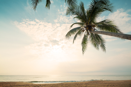 Vintage nature background - Landscape of coconut palm tree on tropical beach in summer. Summer background concept. retro filter effect