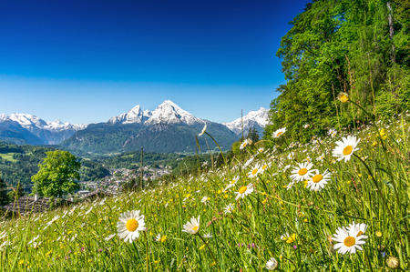 Foto de Panoramic view of beautiful mountain landscape in the Alps with green mountain pastures with flowers and snow capped mountains in the background in springtime - Imagen libre de derechos