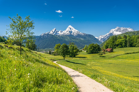 Foto per Idyllic summer landscape in the Alps with fresh green mountain pastures and snow-capped mountain tops in the background, Nationalpark Berchtesgadener Land, Bavaria, Germany - Immagine Royalty Free