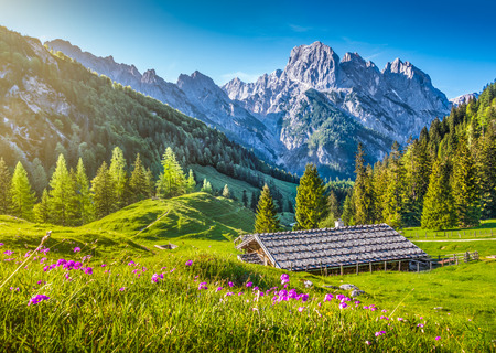 Foto de Idyllic landscape in the Alps with traditional mountain chalet and fresh green mountain pastures with blooming flowers at sunset, Nationalpark Berchtesgadener Land, Bavaria, Germany - Imagen libre de derechos