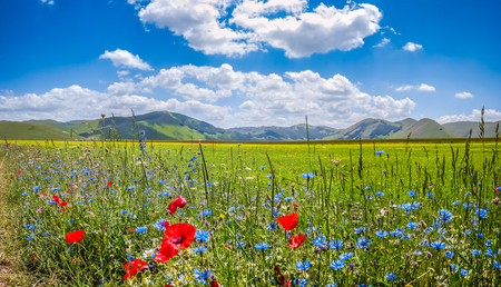 Foto für Beautiful summer landscape at Piano Grande Great Plain mountain plateau in the Apennine Mountains, Castelluccio di Norcia, Umbria, Italy - Lizenzfreies Bild