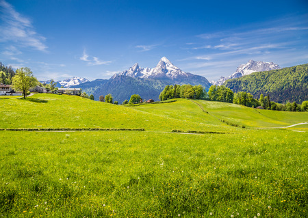 Idyllic landscape in the Alps with fresh green meadows and blooming flowers and snowcapped mountain tops in the background, Nationalpark Berchtesgadener Land, Bavaria, Germany