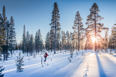 Photo pour Panoramic view of man cross-country skiing on a track in beautiful winter wonderland scenery in Scandinavia with scenic evening light at sunset in winter, northern Europe - image libre de droit