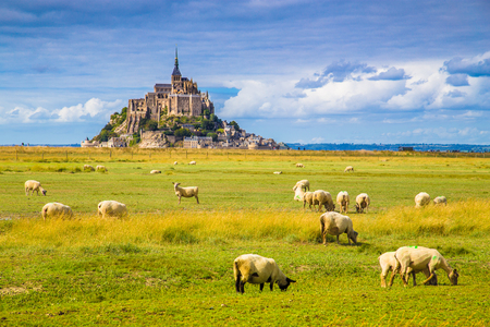 Photo for Beautiful view of famous historic Le Mont Saint-Michel tidal island with sheep grazing on fields of fresh green grass on a sunny day with blue sky and clouds in summer, Normandy, northern France - Royalty Free Image
