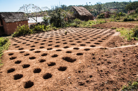 Cultivation in holes in Ambatolampy, Madagascar.
