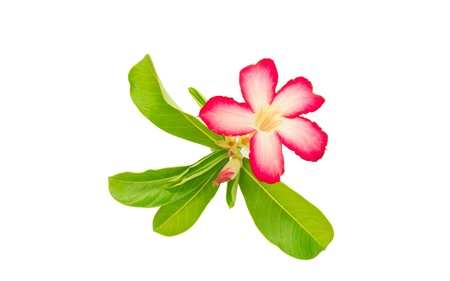 The name of the flowering plants, colorful beauty