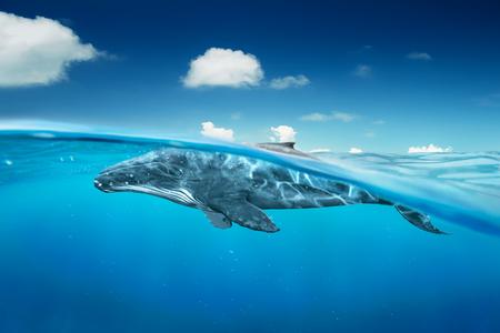 Foto de whale in ocean with half angle view . - Imagen libre de derechos