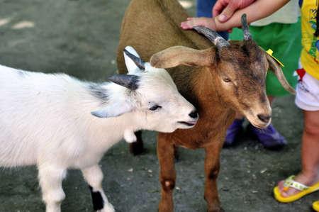 children petting sheep