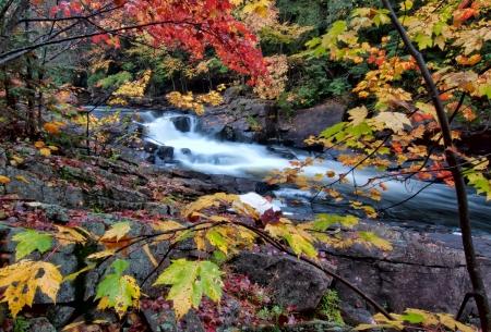 Foto de River framed by colorful autumn leaves of many different colors  - Imagen libre de derechos