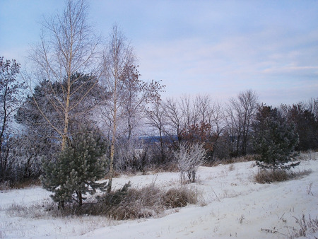 Winter landscape Urals. Branches of trees have become covered with hoarfrost. The dry grass is beaten out from a snowdrift. Cloudy. December