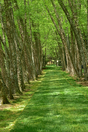 Grass lane