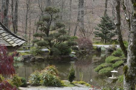 trees aound the pond