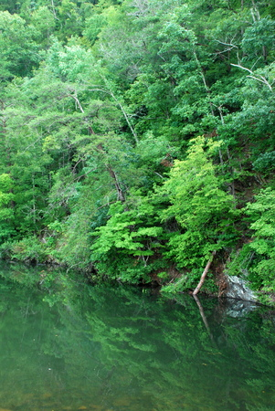 green leave trees on lake
