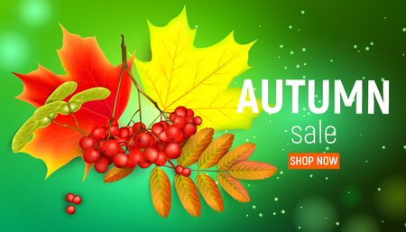 Sales banner with maple autumn leaves and rowan branches with ashberry on a green . Autumn maple leaf and red rowan branches with ashberry on a green illustration