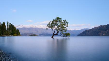 Foto de That Wanaka Tree - Imagen libre de derechos