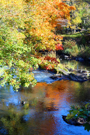 Colorful trees and a stream