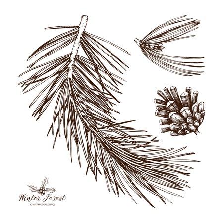 Illustration pour Vintage Pine Tree illustration. Hand drawn conifer sketch with cone on white background. Vector conifer plant. - image libre de droit