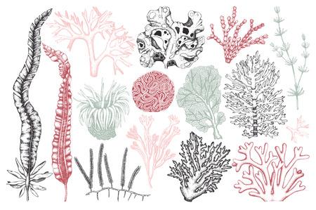 Illustration pour Vector collection of hand drawn seaweeds, corals - image libre de droit