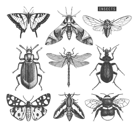 Illustration for Vector collection of high detailed insects sketches. - Royalty Free Image