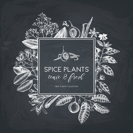 Illustration pour Vector card design with hand drawn spices. Decorative background with aromatic and tonic fruits plants sketch. Vintage kitchen template. Food ingredients on chalkboard - image libre de droit