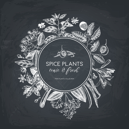 Illustration pour Vector card design with hand drawn spices. Decorative background with aromatic and tonic fruits plants sketch. Vintage kitchen template. Food ingredients. - image libre de droit