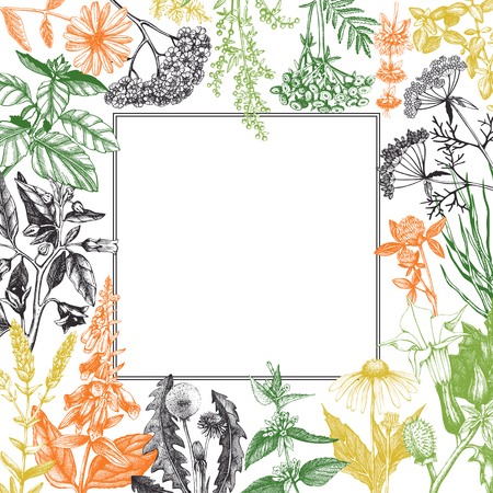 Illustration pour Vector card design with hand drawn herbs and weeds illustration. Decorative inking background with vintage plants sketch. Sketched floral template - image libre de droit