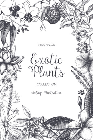 Illustration for Exotic background with hand drawn plants sketch. Vector tropical flowers, leaves and fruits design. Vintage template with botanical elements on white. - Royalty Free Image