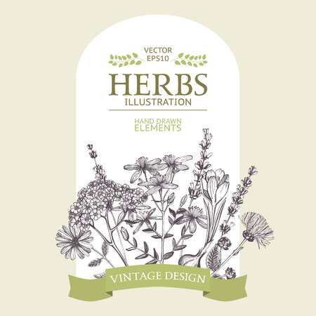 Illustration pour Vector design with hand drawn herbs. Decorative background with vintage medicinal herbs sketch - image libre de droit
