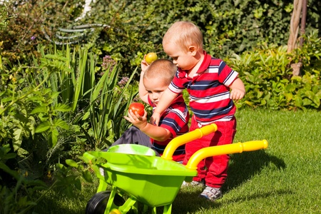 Little brothers enjoy garden on sunny summer day.