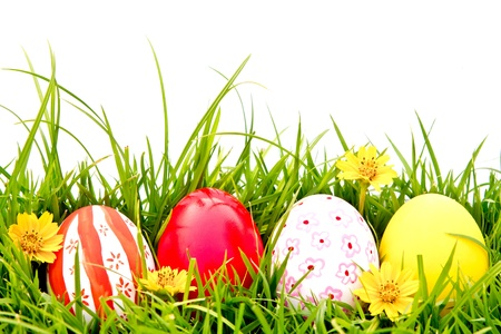 Foto per Easter Eggs with flower on Fresh Green Grass over white background - Immagine Royalty Free