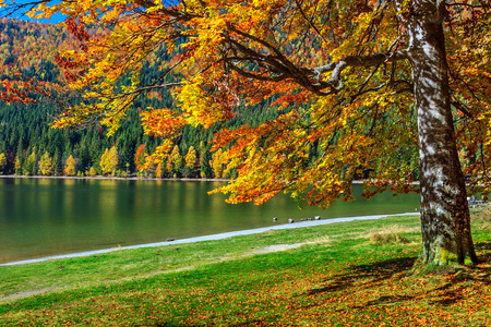 Autumn forest landscape and famous volcanic lake in Transylvania,St Anna Lake,Romania,Europe