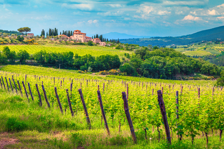 Photo for Amazing wine grower territory and vineyard with house on the hill, Chianti region, Tuscany, Italy, Europe - Royalty Free Image