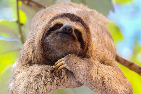 Photo pour Happy Sloth - image libre de droit