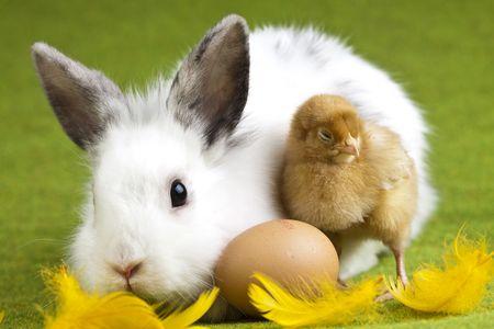 Photo pour Animal easter  - image libre de droit