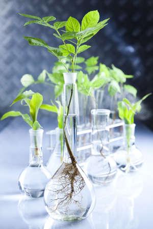 Foto de Experimenting with flora in laboratory  - Imagen libre de derechos