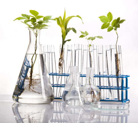 Laboratory glassware containing plants in laboratory